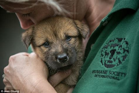 puppies are us south korea dogs saved from being turned into soup daily mail
