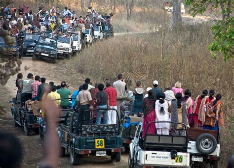 Mba Vs Mf by Tiger Tourism Or Conservation India