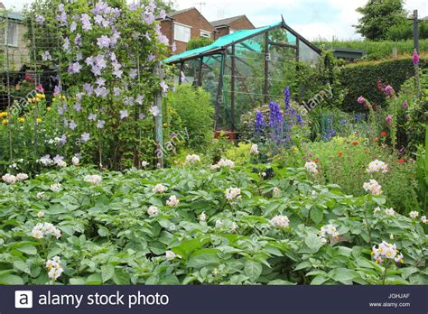 allotment raised beds stock  allotment raised beds