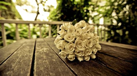 rose themes new beautiful white roses wallpapers photos flowers images