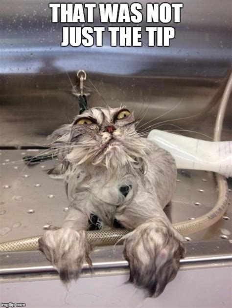 Just The Tip Meme - angry wet cat imgflip