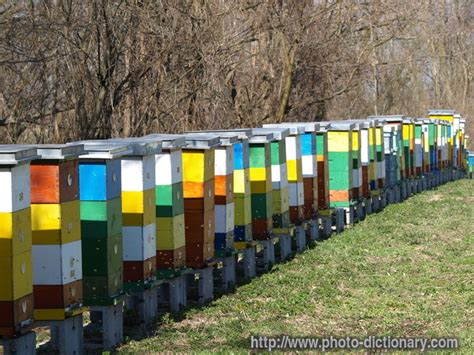 beehives photo picture definition at photo dictionary beehives word and phrase defined by