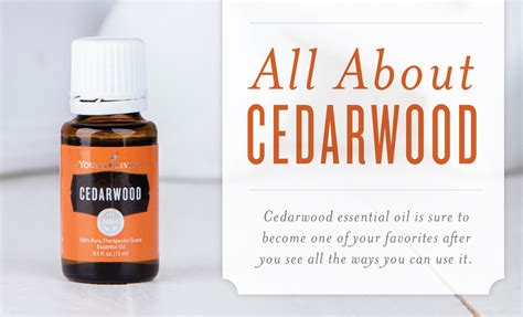 Youngliving Essential Cedarwood 15ml cedar essential and its uses living