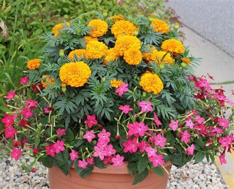 Pretty Planter Ideas by Pretty Planter Container Ideas Momcrieff