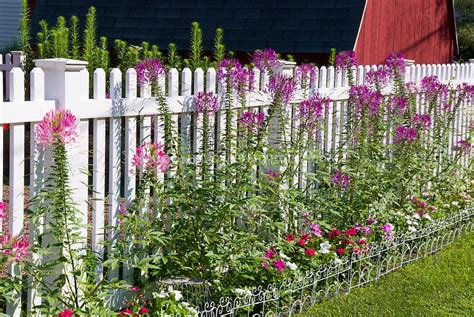 Ask A Question Forum How To Protect Plants From Weed Flower Garden Fence