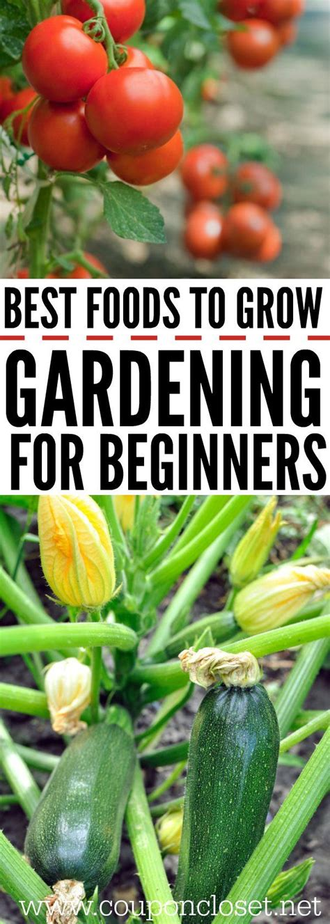 1290 best gardening images on pinterest gardening plants and compost tea
