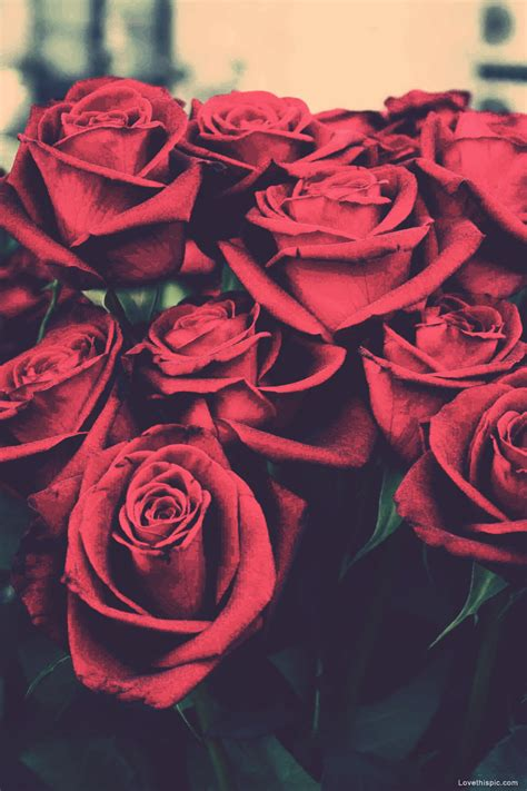 wallpaper tumblr red rose eletragesi dark red roses tumblr images