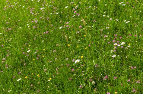 naturgarten ideen naturgarten 187 sch 246 ne idee f 252 r eine kreative gestaltung