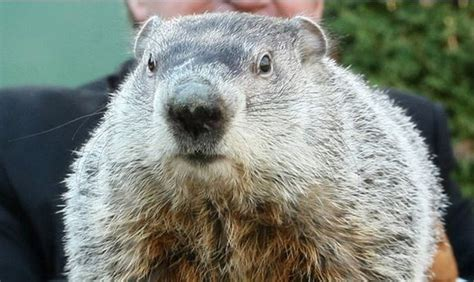 groundhog day deeper meaning punxsutawney phil predicts early joe my god