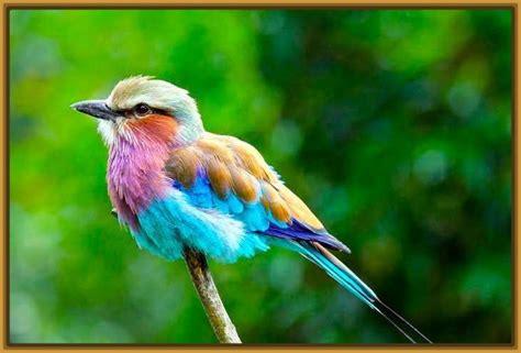 fotos de aves exoticas para imprimir archivos imagenes fotos de aves exoticas del mundo archivos imagenes de