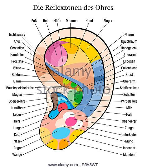 supplement 6 to part 742 of the ear ear diagram stock photos ear diagram stock images alamy