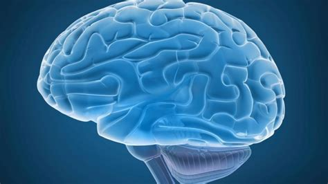 Brain Shrinks To Detox At by Out Of Shape In Middle Age May A Smaller Brain Later