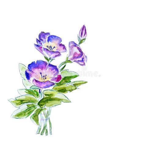 fiori della primavera fiori della primavera illustrazione dell acquerello