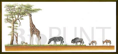 cadena alimenticia jirafa galeria natural natural gallery sabanas para 237 sos para