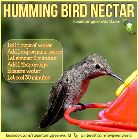 we love our little humming birds here is a recipe that