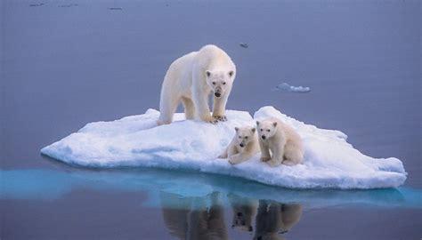 the polar bear explorers 0571332544 british explorer in polar bear attack on nat geo