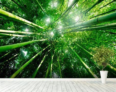 Bamboo Forest Wallpaper Room - bamboo forest wallpaper wall mural wallsauce