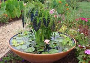 best plants for container water garden ideas home
