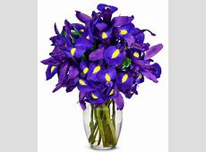 Stunning Blue Iris - 10 Stems at From You Flowers Gift Baskets Delivered Today
