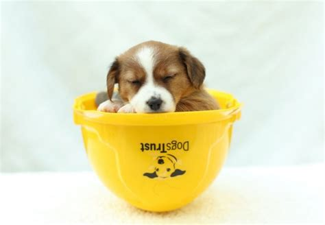 websites to sell puppies new puppy centre built to deal with ireland s abandoned crisis