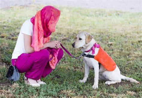 pomeranian collapsed trachea symptoms best harness for dogs with collapsed trachea with cushings elsavadorla