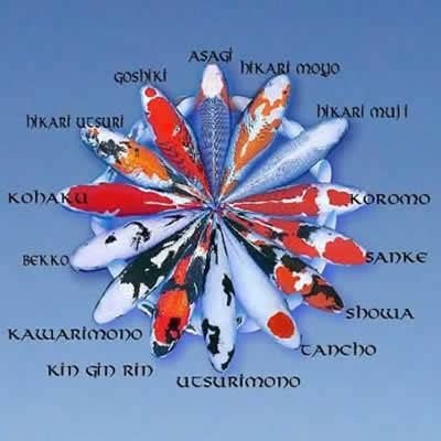 koi fish color meaning chart do your homework better and faster