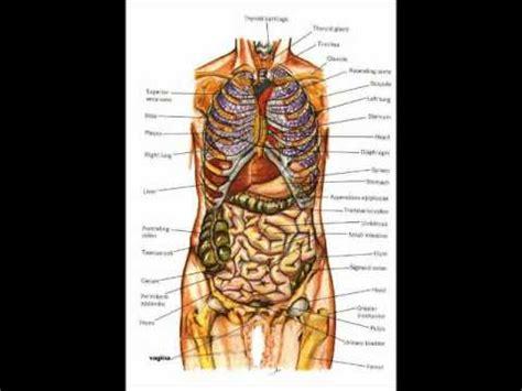 human anatomy coloring book marieb anatomy image organs human anatomy and physiology book