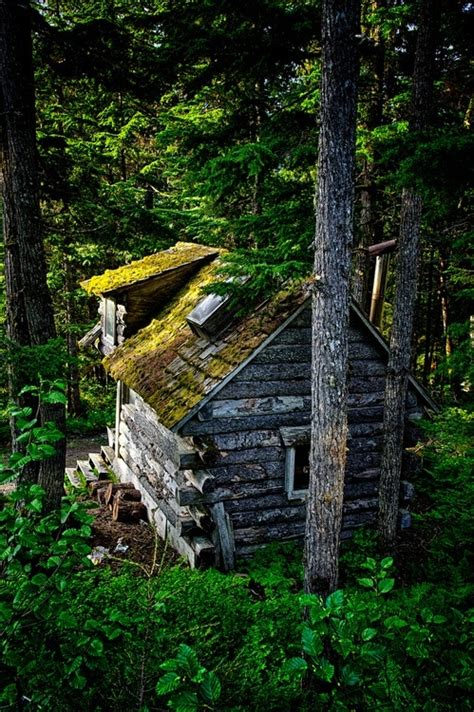 small cabin in the woods little log cabin in the woods cabins pinterest
