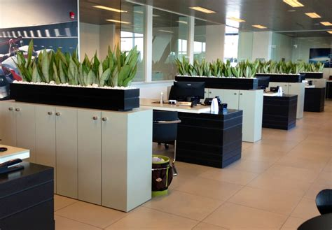 plants for the office a plant service that says no to boring office plants