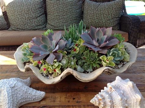 succulent house which succulent plants do you like best for your house in