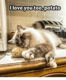 Love You Too Meme - love you too potato love meme on sizzle