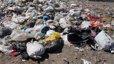 harmful effects of single use plastic bags on our