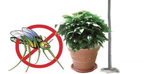 piante da giardino antizanzare 5 piante anti zanzare facili da coltivare greenme