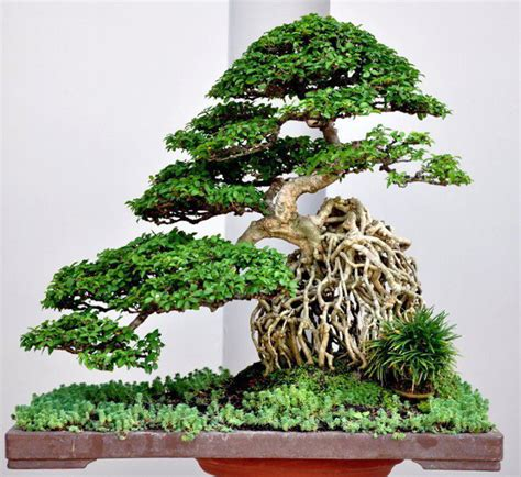 Anting Tapres a cozy companion bonsai bark