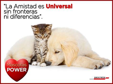 imagenes de gatos sin frases la amistad universal frasespower mascotas power