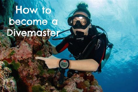 dive master how to become a divemaster coffeewithasliceoflife