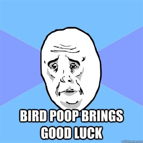 Bird Shit Meme - 14 best memes bird poop images on pinterest meme memes and animal pics