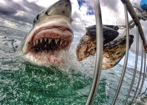 Animal Planet World S Most Dangerous Animals the 10 most dangerous animals on the planet the vacation