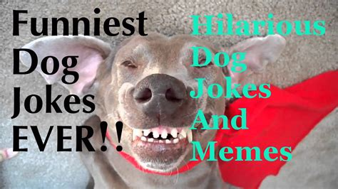 funny dog jokes  kids funny jokes  dogs