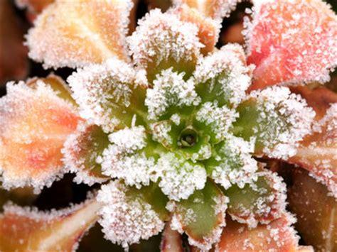 Best Planter Flowers by Top 10 Winter Plants Howstuffworks