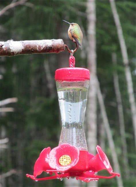 hummingbird feeder ratio hummingbird food recipe genius kitchen