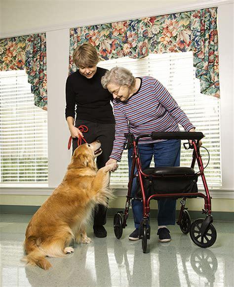 puppy therapy time4dog pet therapy progetti e corsi formativi