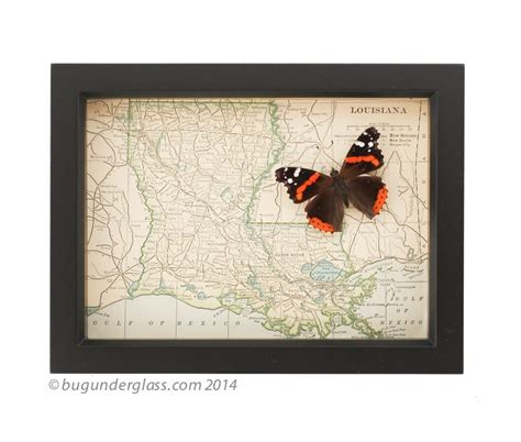 louisiana map framed framed louisiana map bug glass