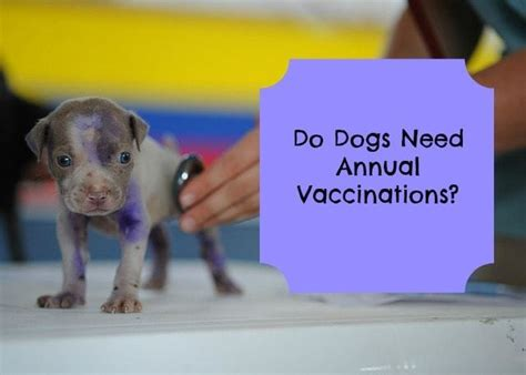 what vaccines do puppies need do dogs need annual vaccinations paws right here