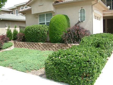 lawnless front yard
