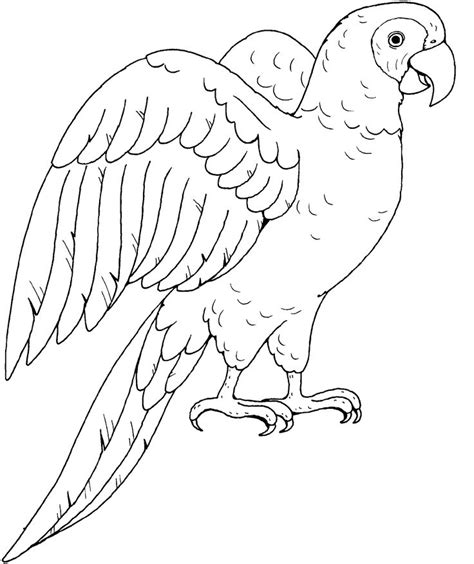 coloring page of birds and insects 500 best images about birds insects etc coloring pages