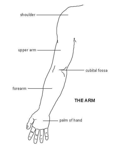 sections of the arm arm diagram patient co uk
