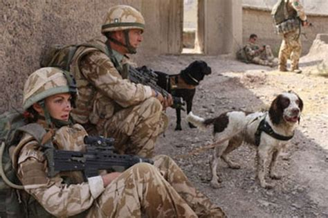 kia iraq war dogs of war canine heroes killed in iraq and afghanistan