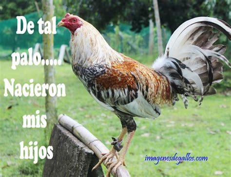 imagenes gratis de gallos con frases imagenes de gallos con frases perronas para descargar