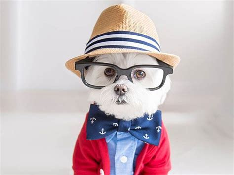imagenes abstractas hipster perro hipster cu 225 nto hipster